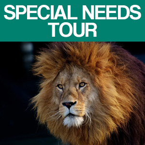 Lamers Tour & Travel Special Needs: Milwaukee Zoo Feature Image of Lion